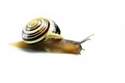 Comment améliorer la vitesse de son blog Wordpress